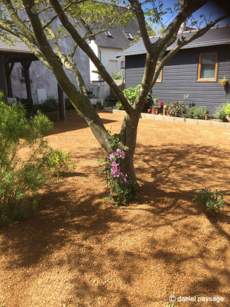 Clématite-albizia-grou-aménagement jardin