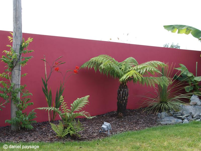 Mur-rouge-fougère arborescente