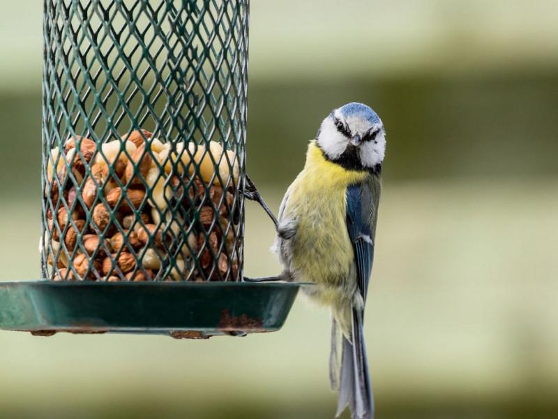 RDV aux jardins 2019 oiseaux