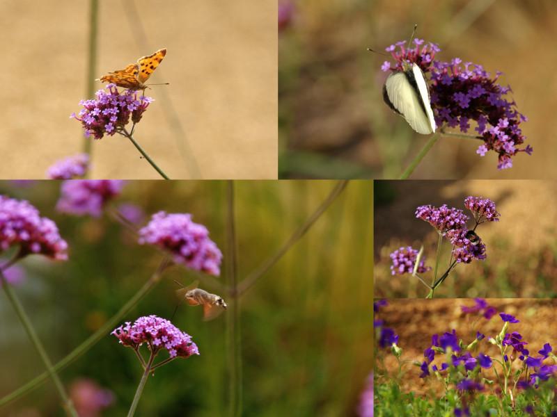 RDV aux jardins 2019 papillons