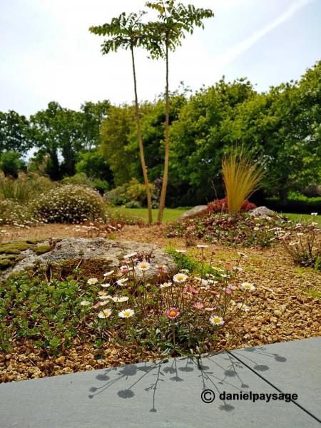 vegetation dans grou