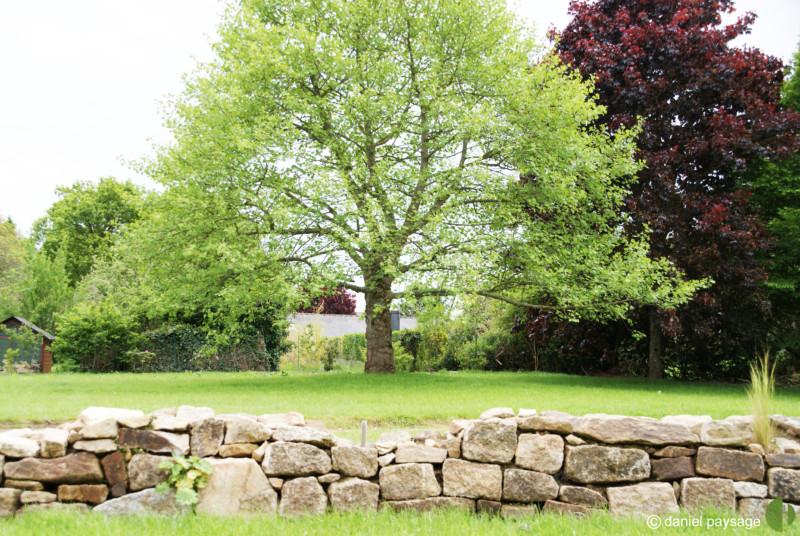 muret pierres sèches et arbre de vie